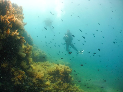 Brad and Amanda exploring the reef: Secca Punta Secca