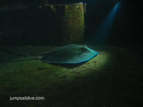 A fantastic stingray