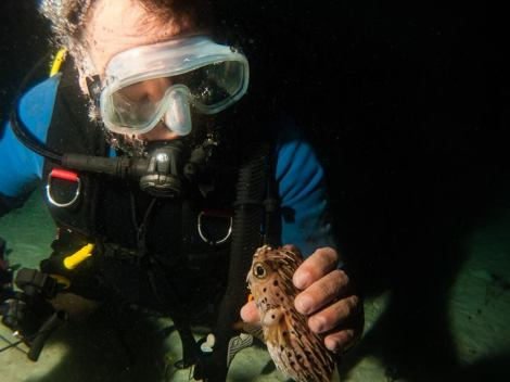 A diver holding a pufferfish. Something that you should not ever do.