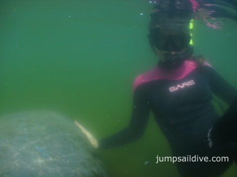 Snorkelling with manatees in Crystal River