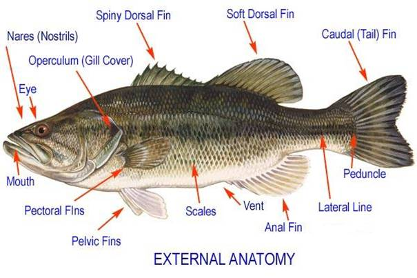 fish identification jump sail dive
