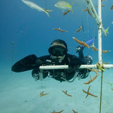 Me cleaning the corals
